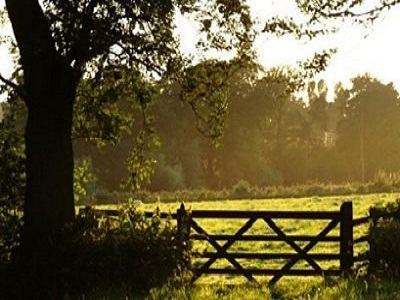A pasture scene with trees, a gate, and woods representing our County Plat Books.
